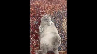 Daily cat video - 8