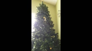 Kitten stuck in Christmas tree decides to battle harmless ornament