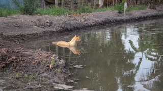 The dog does not want to get out of the water