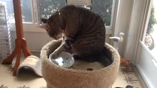 The cat trying to drink water by it's hand XD