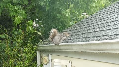 Squirrel In The Rain!