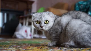 The cat that amazed everyone with its beauty