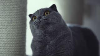 cute kitten looking around
