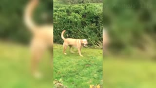 Best Funny Dogs Videos Of The Cute Cats & Dogs Reactions