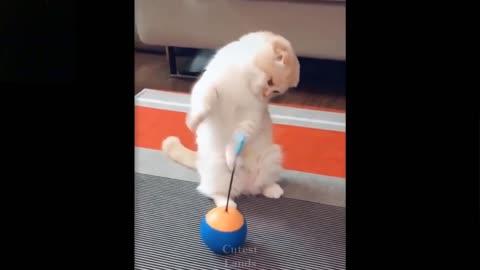 Ilike to watch how animals play