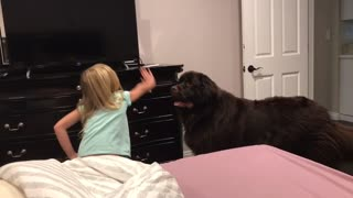 Mom documents hilarious bedtime routine with huge Newfoundland