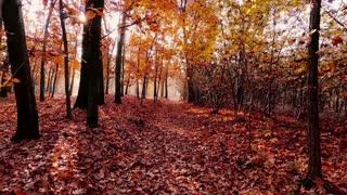Autumn: beautiful nature and light music