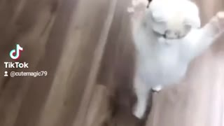 Savage kitty