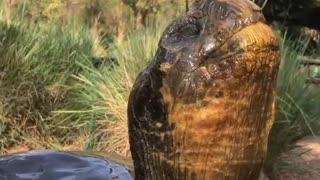 Tortoise Keeps Cool