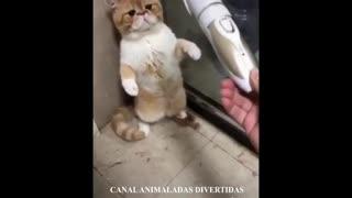 Vídeo graciosos de perros y gatos