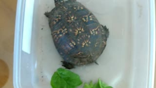 Turtle PT.2