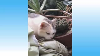 Compilation of cute cat pets and funny animals