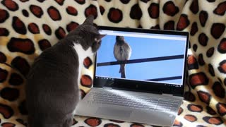 Funny Cat trying to catch a bird