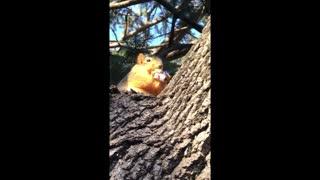 Squirrel Buddy Loves Snacks