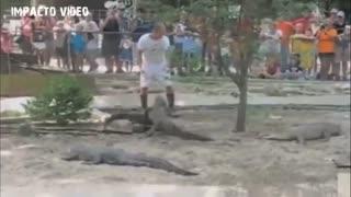 Wild animal attacks 2