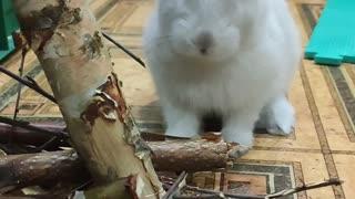 My favorite rabbit