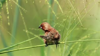 Bird sitting in tall grassland - With great music