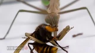 Murder Hornet Solution