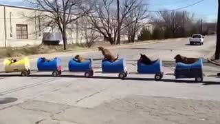 Interesting Train Of Dogs