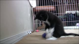 Cute Kitten Playing with a ball