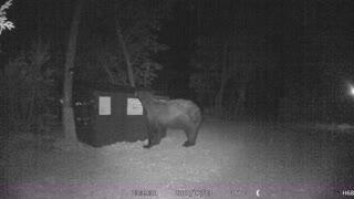 Bear in my Backyard!