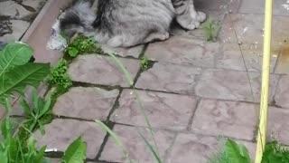 Cat near the house.