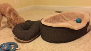 Dog literally tucks himself into bed