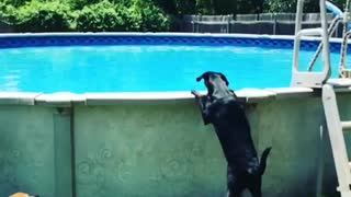 Watch this dog jump into a pool in epic slow motion