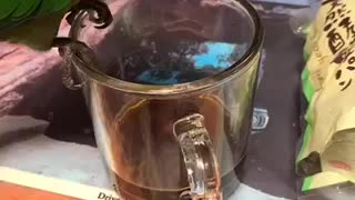 Parrot drink coffee?