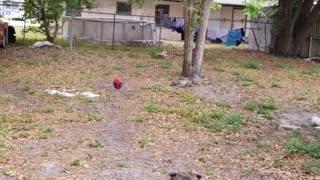 Maya's football