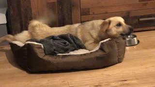 Formerly Abandoned Dog Shares Joyful Moment with New Family