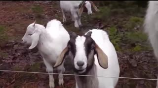 Animal shocks with sound effects