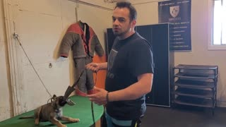How to Begin protection training with a German Shepherd puppy