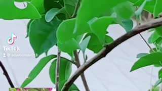 Beautiful garden palms
