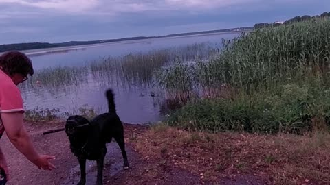 My dog's water joys.