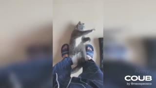 Bruce Lee meets Cat Lee Hilarious