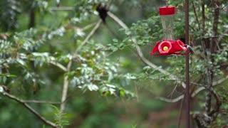 Hummingbirds - Kleb Woods Nature Preserve
