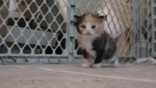 Tiny Three-Week-Old Kitten Coming When Called!!