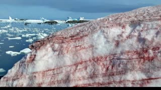 Strange Life Forms Accidentally Discovered Deep Below Antarctica