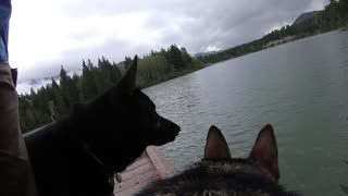 GoPro-wearing dog jumps off dock to fetch stick