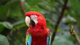 Cute colorful Parrot HD video