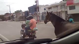 Video: Presunto caso de maltrato animal en Cartagena