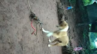 My Dog Playing With Crab