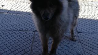 Beautiful dog, Plush dog
