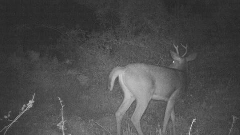 4 point spots a monster lurking, can you?
