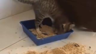 Cat litter choices
