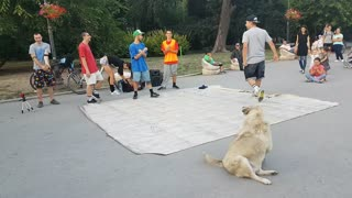 Breakdancing Doggy Joins Performance