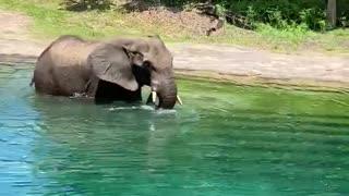 Disney Animal Kingdom safarii