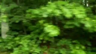 nature in atlanta