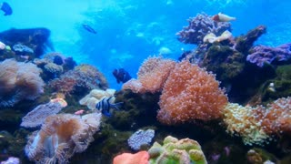 Ocean animal world